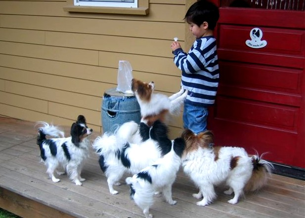 0Henry with dogs Feb 2006(1)