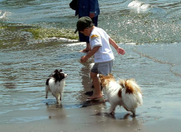 1dogs at beach