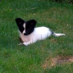Orville puppy in grass