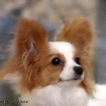 Sissy 2007