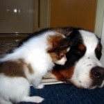 Spark as a baby with his Berner babysitter