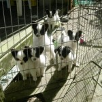 puppies-in-morning-sunshine-May-19(1)